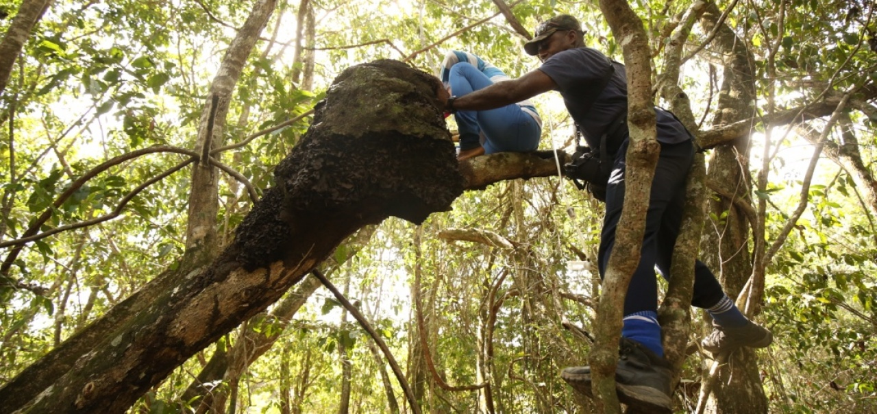 Field work in the Neotropics
