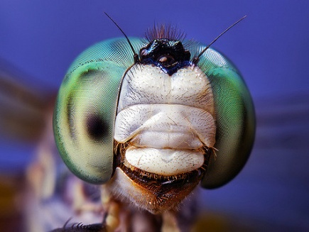 Insect close-up